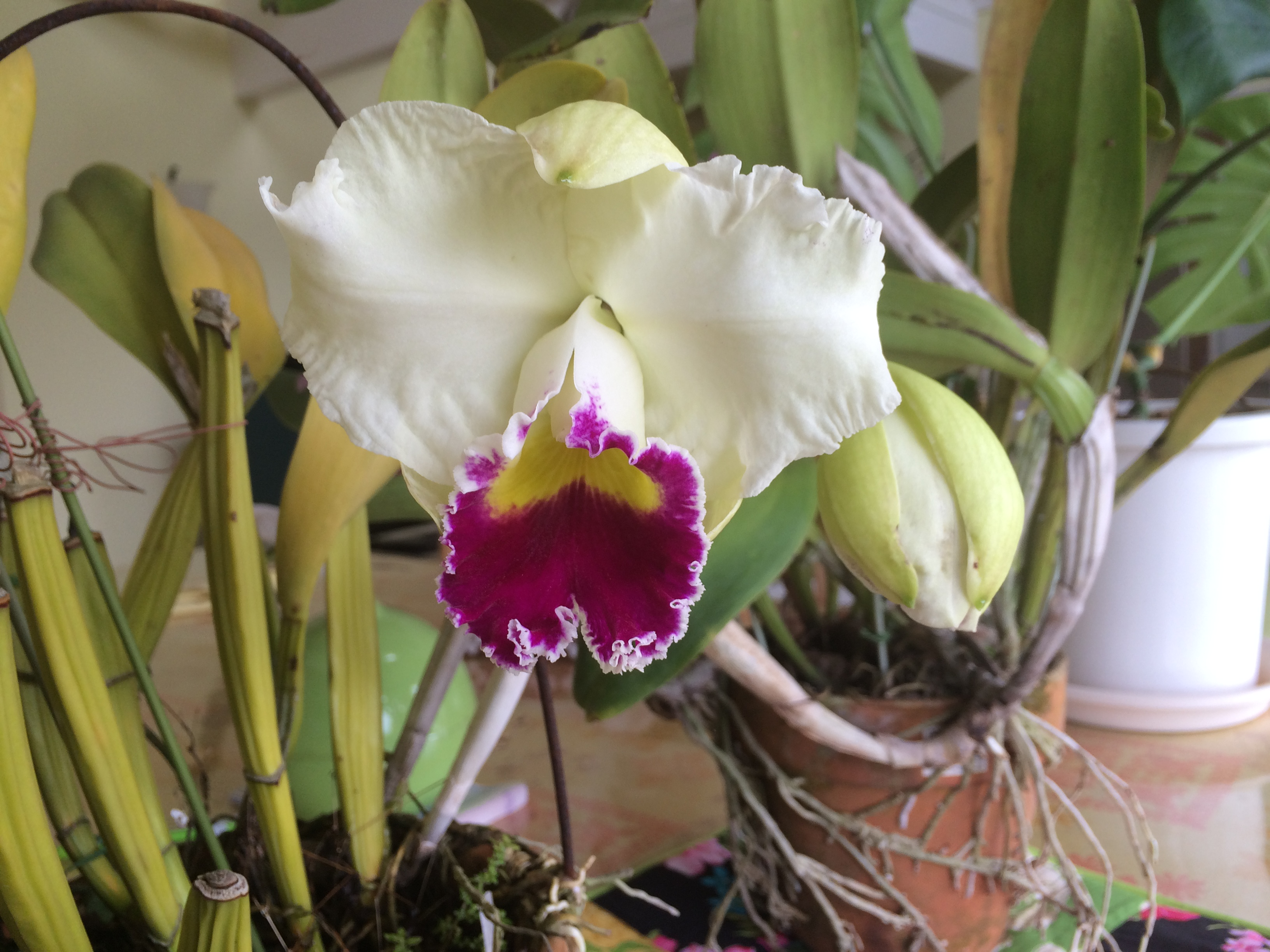 ココペリハウスの花を紹介