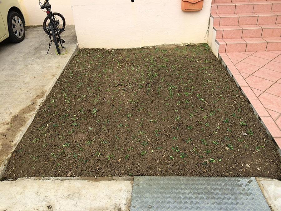 エントランスにヒメキランソウを植えました