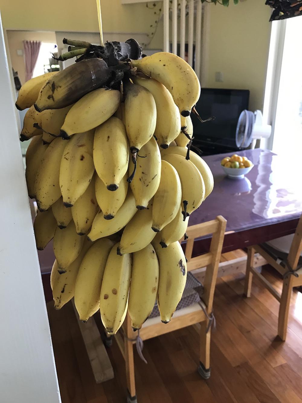 島バナナとみかんいただきました