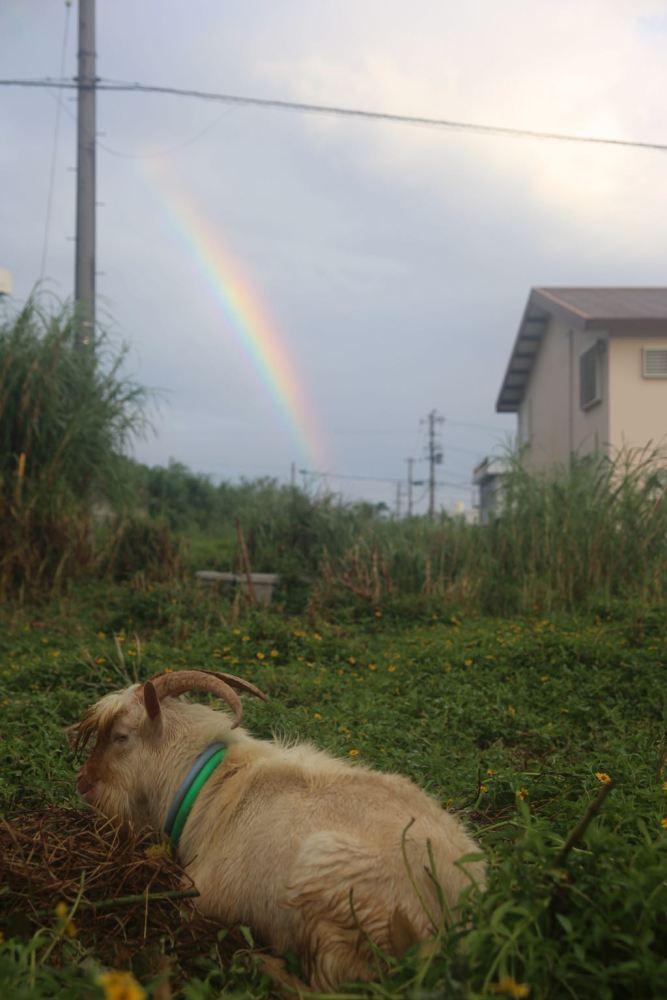ココペリハウスと虹とユキオ
