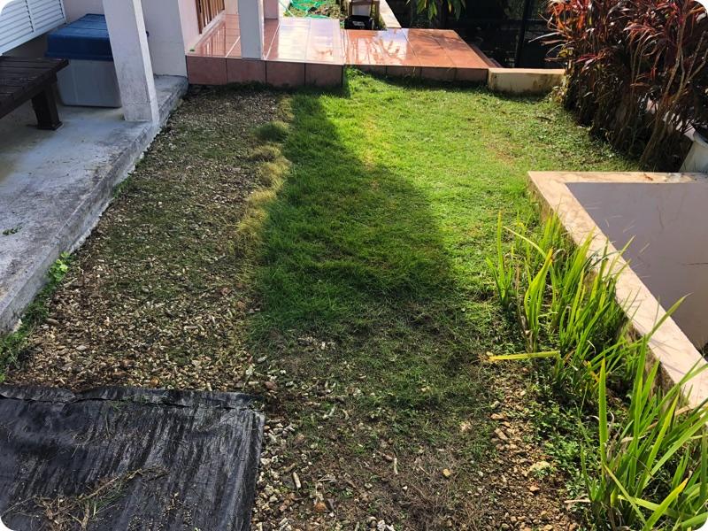 芝生を拡充しよう